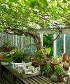 中庭の植物達